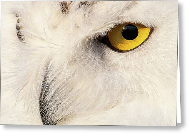 Snow Owl Eye Greeting Card