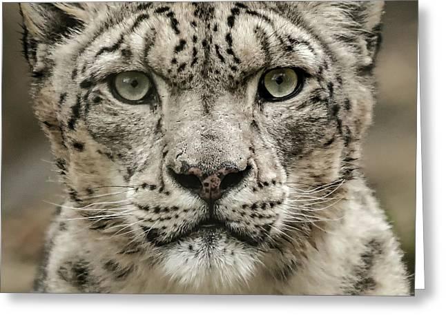 Snowleopardfacial Greeting Card