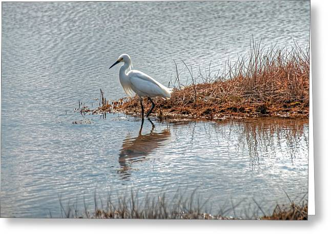 Greeting Card featuring the photograph Snowy Egret Hunting A Salt Marsh by Wayne Marshall Chase