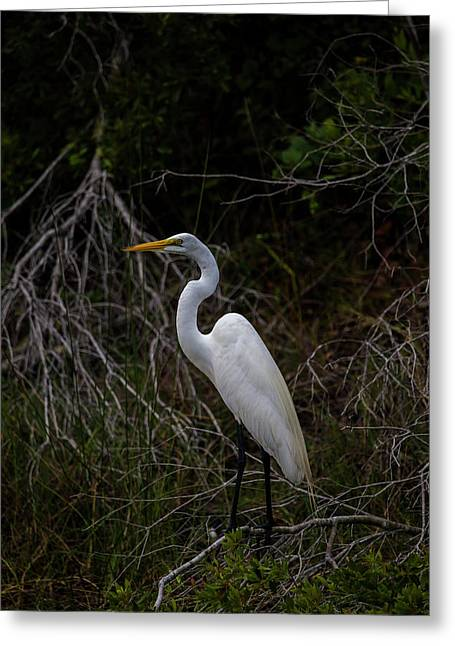 Snowy Egret On A Hot Summer Day Greeting Card