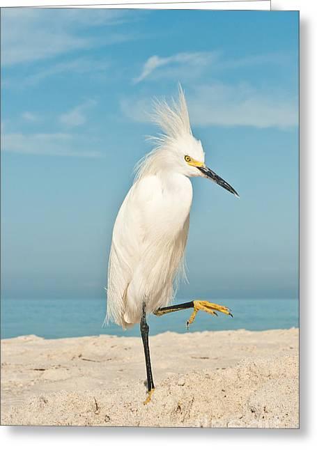 Snowy Egret Standing On Sandy Beach On Greeting Card
