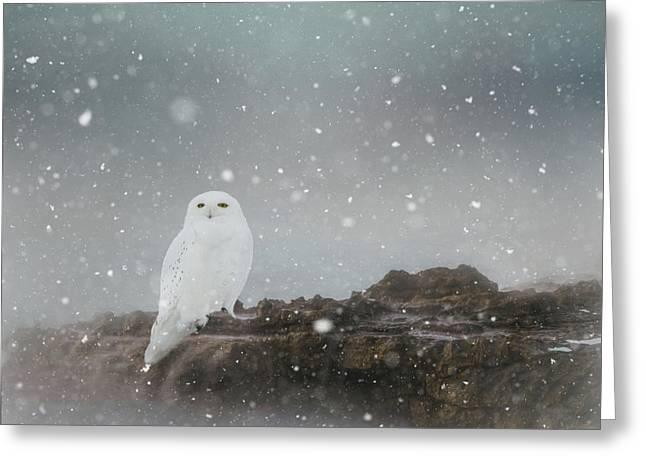 Snowy Owl On A Ledge Greeting Card