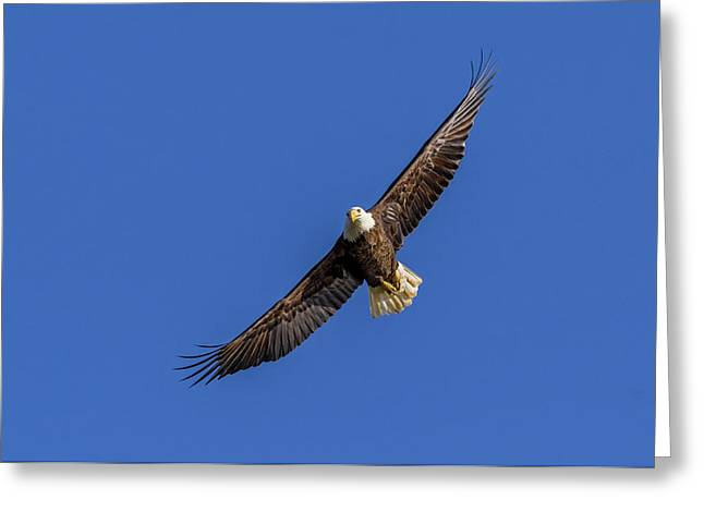 Greeting Card featuring the photograph Soaring Eagle by Lori Coleman