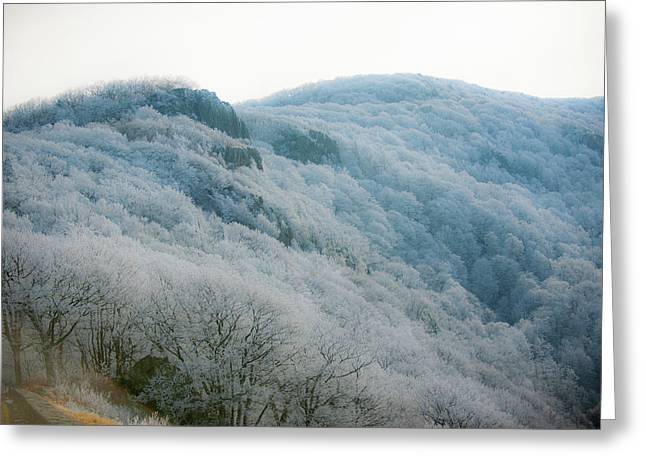 Soft Hoarfrost Greeting Card