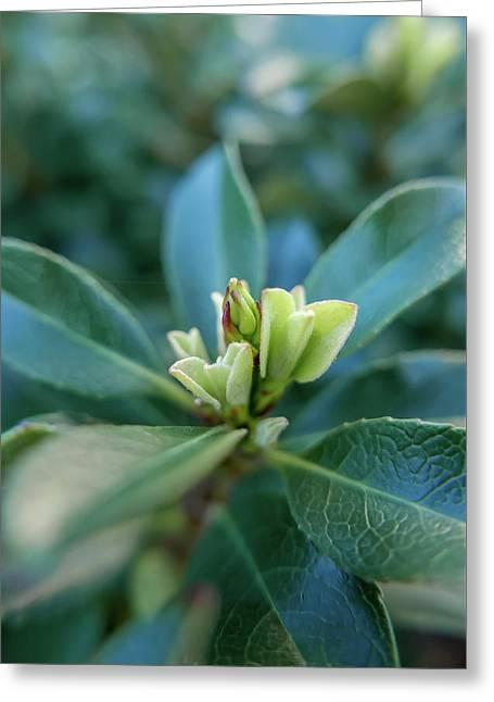 Softly Blooming Greeting Card