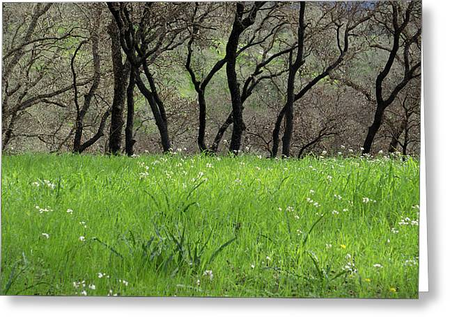 Sonoma Valley Rp_1148_18 Greeting Card