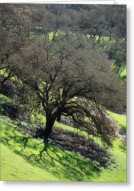 Sonoma Valley Rp_oak_1333_18 Greeting Card