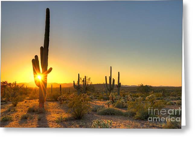 Sonoran Desert Catching Days Last Rays Greeting Card