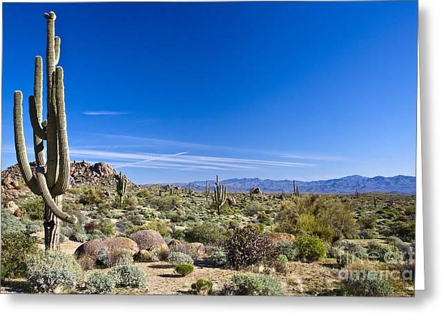 Sonoran Desert Landscape In Scottsdale Greeting Card