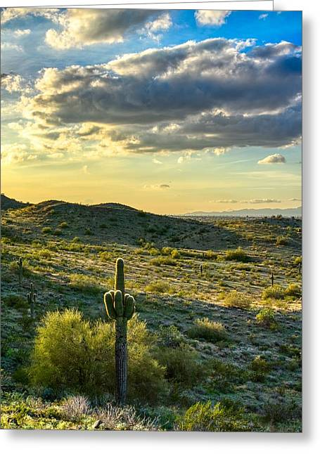Sonoran Desert Portrait Greeting Card