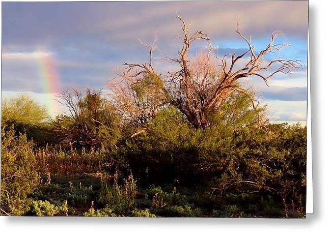 Sonoran Desert Spring Rainbow Greeting Card