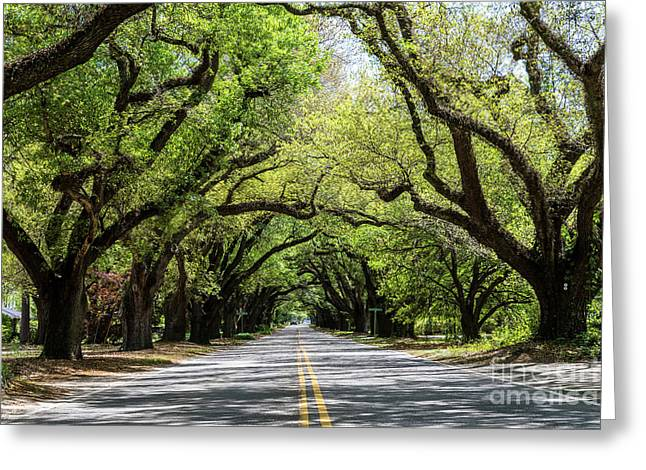 South Boundary Ave Aiken Sc Greeting Card