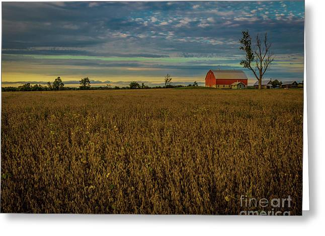 Soybean Sunset Greeting Card