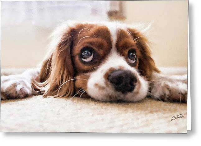 Spaniel Puppy Dwp2785074 Greeting Card