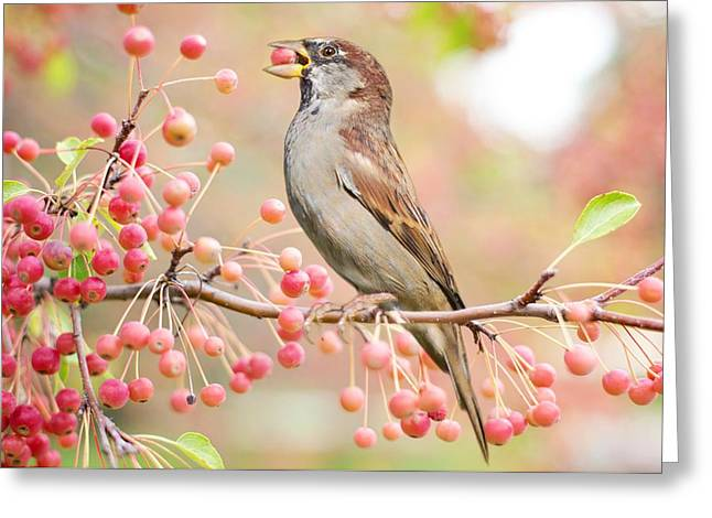 Greeting Card featuring the photograph Sparrow Eating Berries by Top Wallpapers