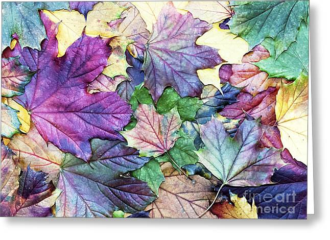 Special Colored Autumn Leaves Greeting Card