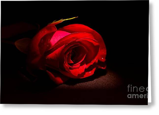 Spotlight Shines On Red Rose Greeting Card