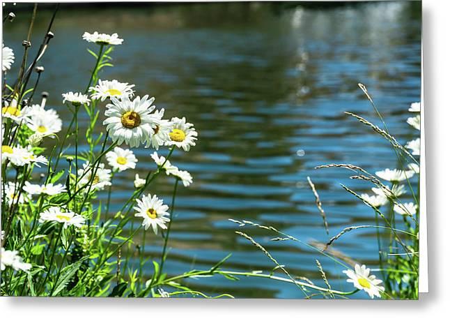 Spring Daisy Greeting Card