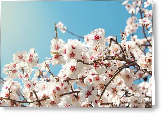 Spring Flowers. Spring Flowers Greeting Card