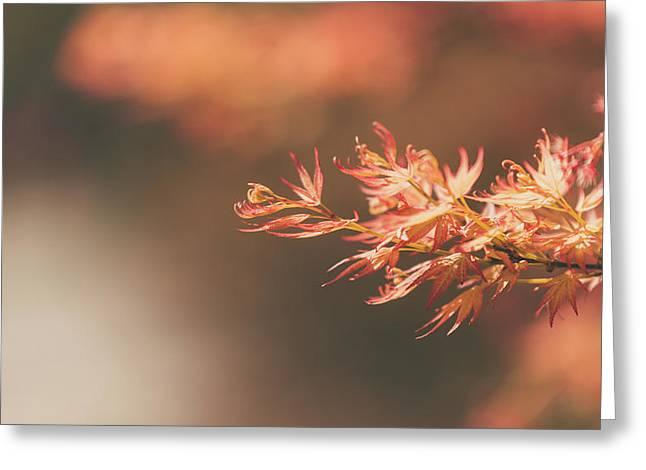 Spring Or Fall Greeting Card
