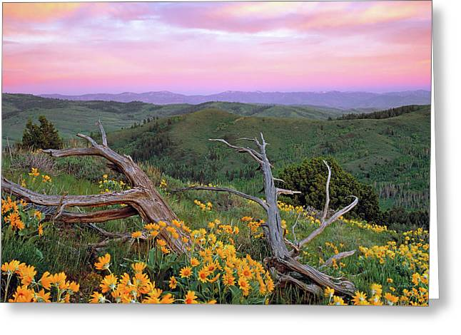 Spring Sunset Greeting Card by Leland D Howard