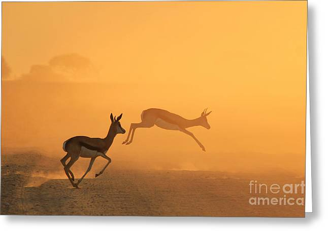 Springbok - African Wildlife Background Greeting Card