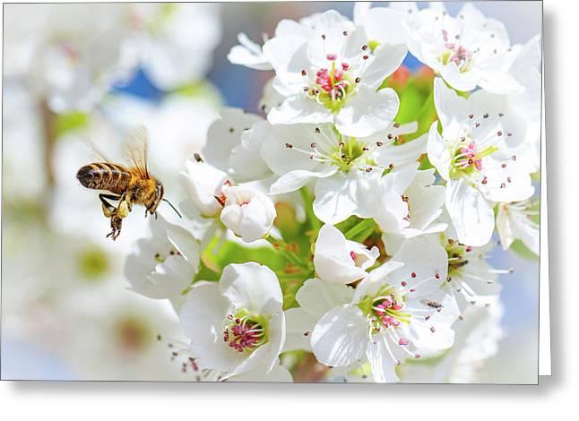 Springtime Buzz Greeting Card