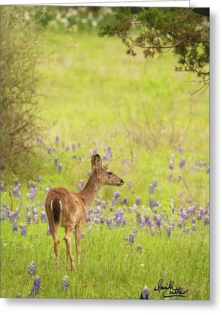 Springtime Whitetail Greeting Card