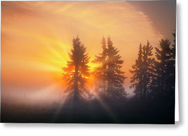 Spruce Trees In The Morning Greeting Card