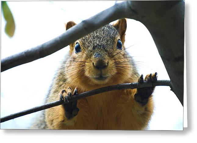Spying Fox Squirrel Greeting Card