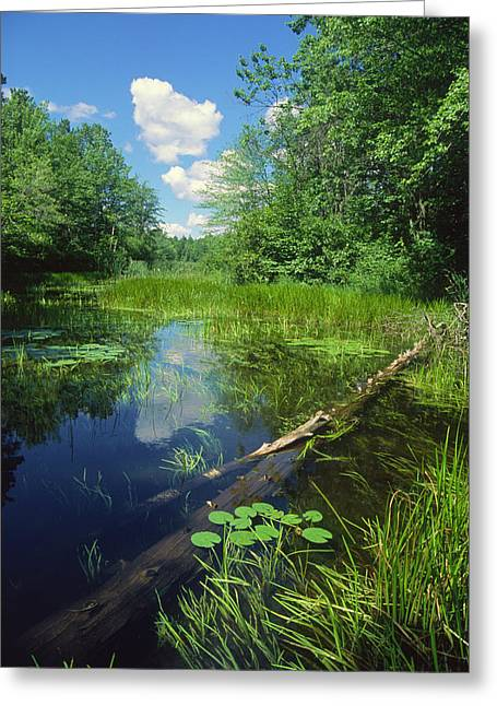 Squaw Lake Greeting Card