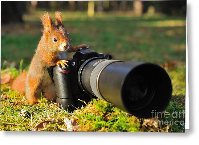Squirrel As A Photographer With Big Greeting Card