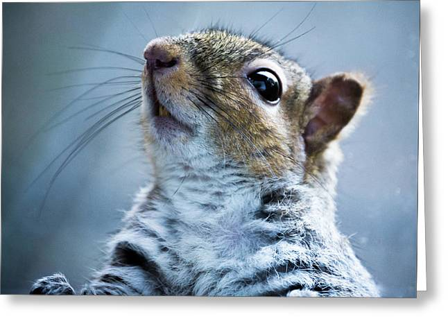 Squirrel With Nose In The Air Greeting Card