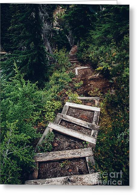 Stairs Lead Down Through The Forest Greeting Card