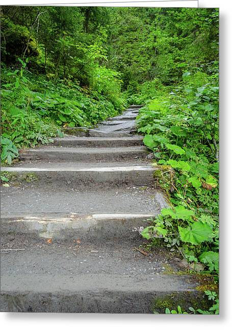 Stairs To The Woods Greeting Card