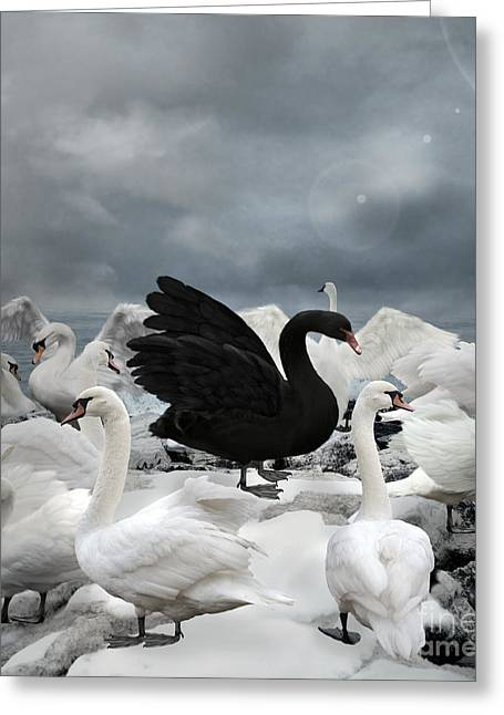 Stand Out Of The Crowd - The Black Swan Greeting Card