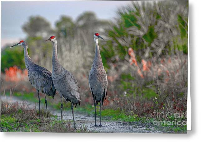 Standing Sandhills Greeting Card