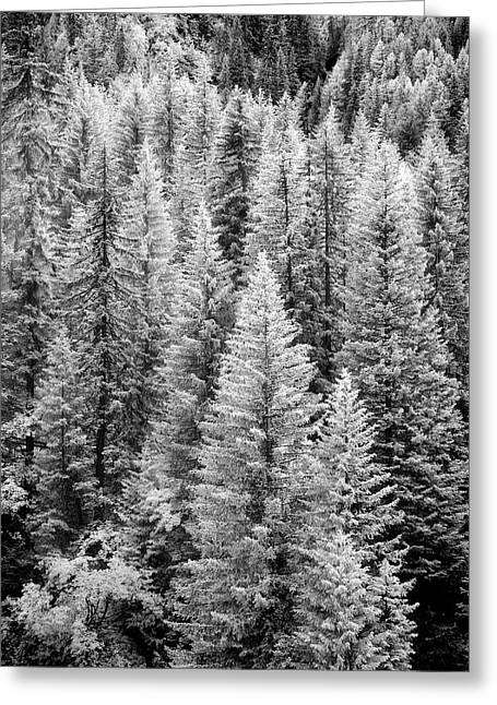 Standing Tall In The French Alps Greeting Card