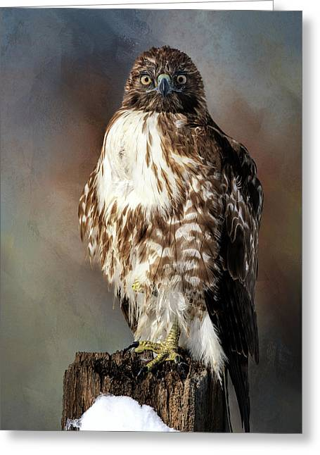 Stare Down With A Hawk Greeting Card