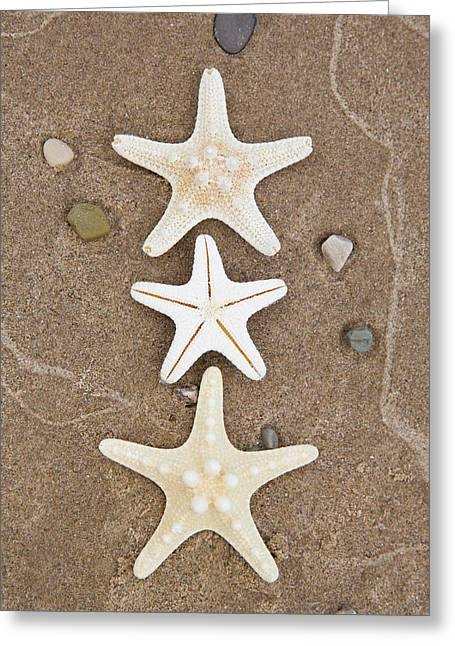 Starfish In The Sand Greeting Card
