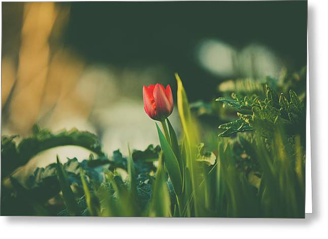 Greeting Card featuring the photograph Start Of Spring by Dheeraj Mutha