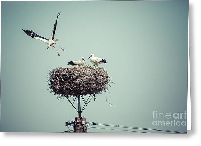 Stork With Baby Birds In The Nest Greeting Card
