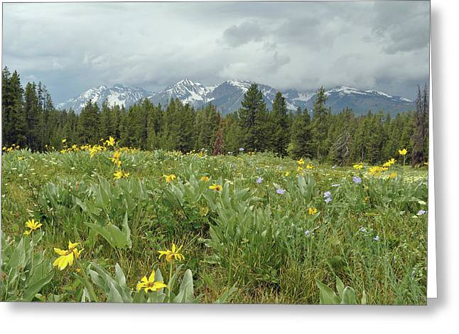 Stormy Tetons And Flowers Greeting Card