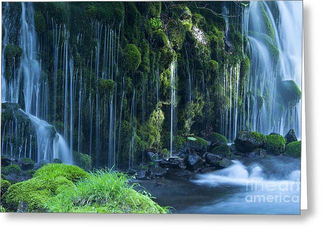 Stream In Green Forest Greeting Card