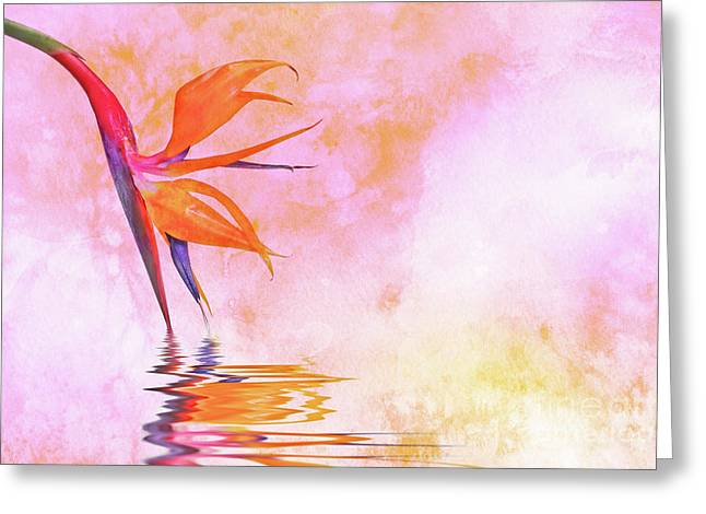 Strelitzia On Pink Greeting Card