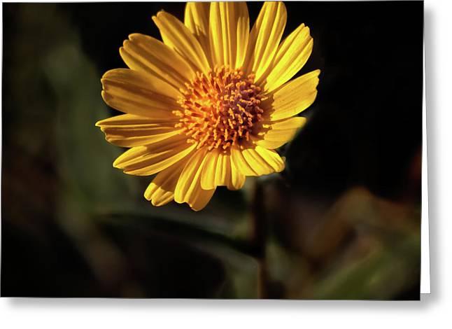 Striking Wild Sunflower Greeting Card