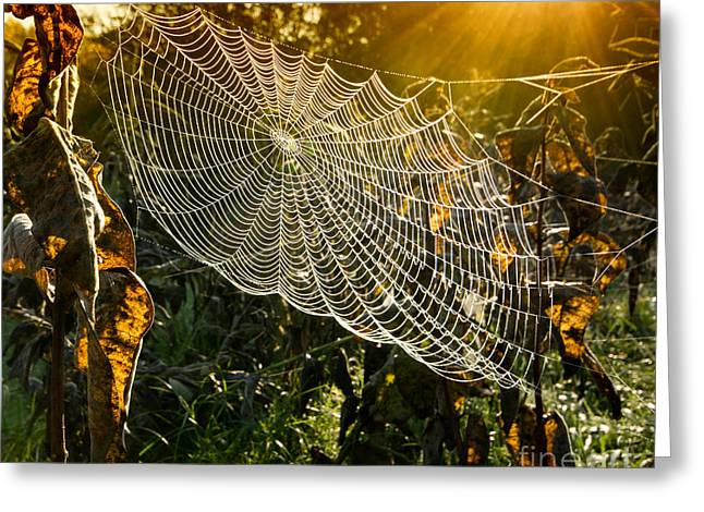 Strings Of A Spiders Web In Back Light Greeting Card