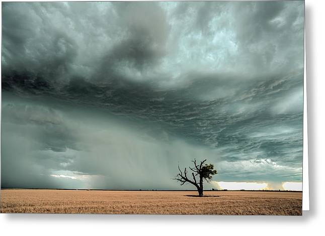 Strong Lone Tree Greeting Card