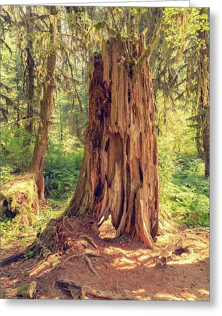 Stump In The Rainforest Greeting Card