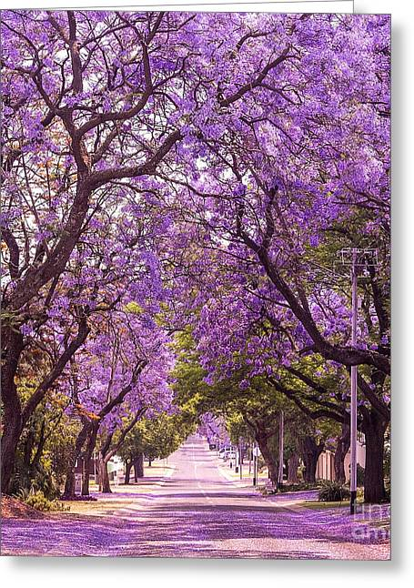 Stunning Alley With Wonderful Violet Greeting Card